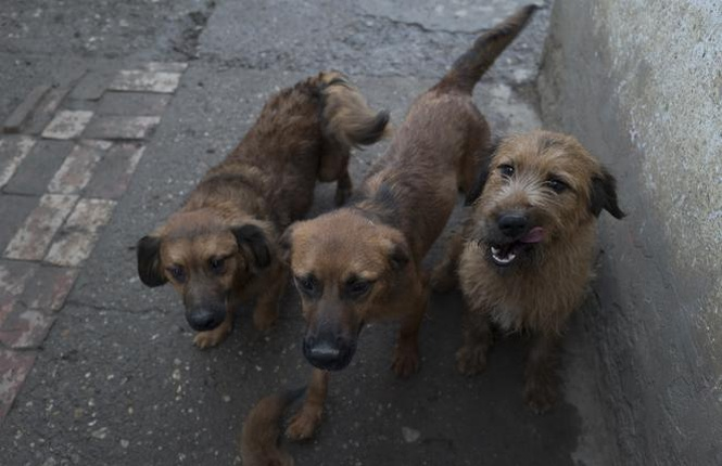SOS dogs with no food - Lina's animal rescue - Animal Webaction