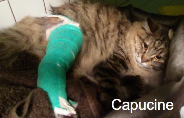 Capucine patte de velours animal webaction for Fenetre capucine