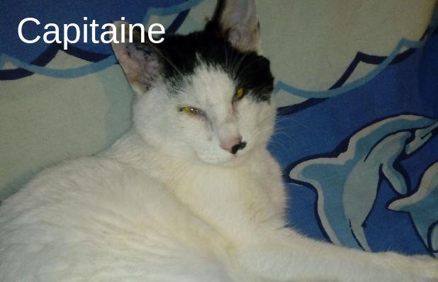 Capitaine Larche De Marie Mes Amours De Chats Animal
