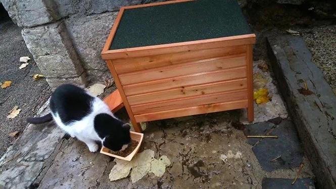 réel chatte humide
