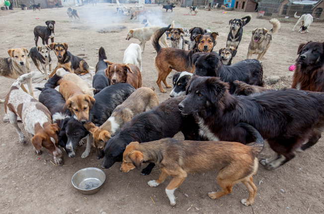 Image result for images of dogs gathering