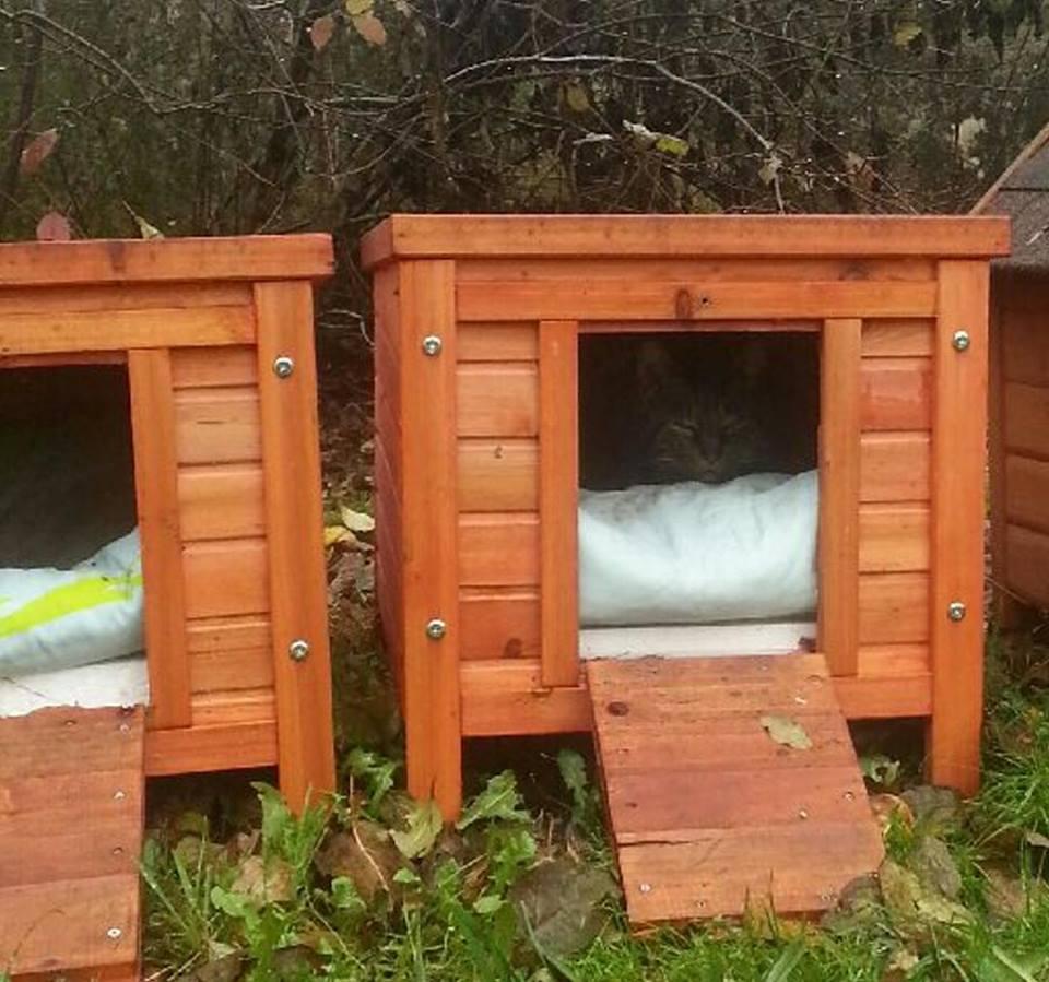 chaperlipopette 77 animal webaction. Black Bedroom Furniture Sets. Home Design Ideas