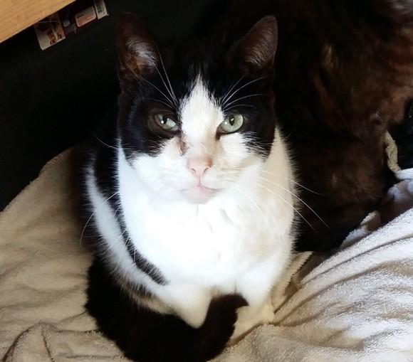 l 39 ecole du chat libre de l 39 indre l 39 ecole du chat libre de l 39 indre animal webaction. Black Bedroom Furniture Sets. Home Design Ideas