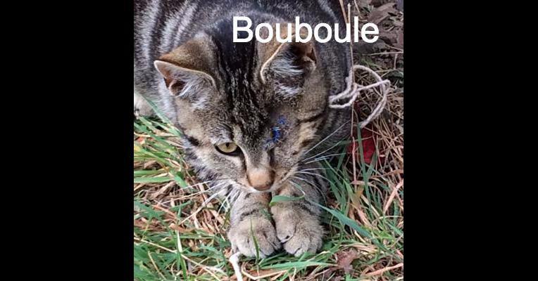 Bouboule jardin des chats animal webaction - Il faut cultiver notre jardin analyse ...